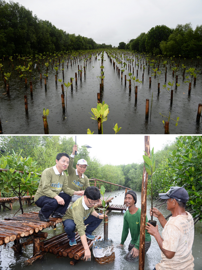 A mangrove plantation in Jakarta planted by the KFS and Indonesia's counterpart organization (top). Minister Shin Won-sop (middle) of the KFS checks the status of mangroves (bottom) (photos courtesy of the KFS).