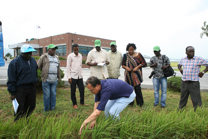 Korea's RDA shares technology for producing high-yield rice plants with ten African countries (photo courtesy of the RDA).