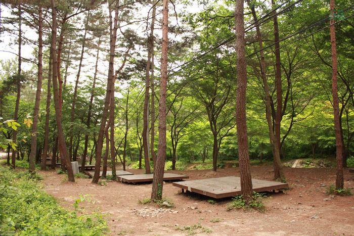 Huirisan Pine Tree Recreation Forest