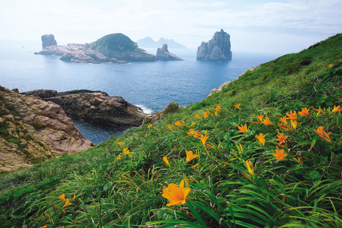 A day lily begins to bloom on one of the Baekdo Islands.