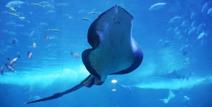 Aquarium meets the jungle: Aqua Planet Ilsan : Korea net