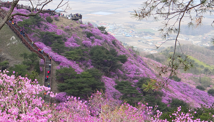 Flower Festivals In Full Bloom Across Korea Korea Net The
