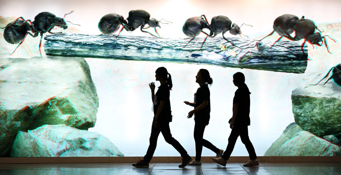 Funny panorama pictures like these big ants attract visitors' attention (photo: Jeon Han).
