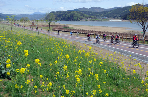 Cyclists enjoy spring flowers and river views while biking along the Nakdong River