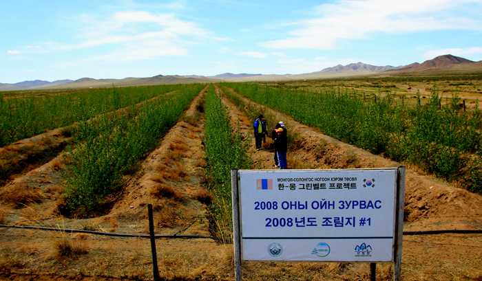 The Korea-Mongolia Greenbelt Forestation Project, underway since 2007, plants trees across the Lun Soum region and the Gobi Desert of Mongolia in an effort to combat rapid desertification. (photo courtesy of the Korea Forest Service)