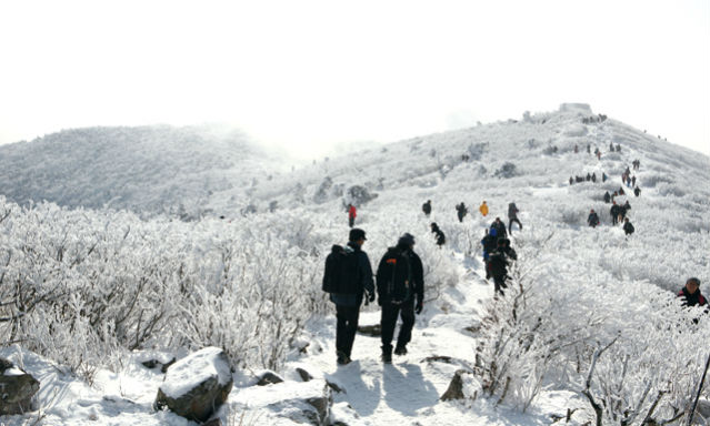 The hike up Taebaeksan Mountain is the highlight of the Taebaek Snow Festival (Photo: Weekly Gonggam).