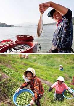 (top) Fish and seafood are abundant in the waters of Yeosu, Goheung, Boseong and Gangjin. A local is buying fish at the fish market; (bottom) Elderly women pick tea leaves from the Boseong green tea plantation.