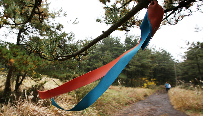 Trekkers along the Jeju Olle Trail can follow the ribbons of red and blue. They indicate where the trail goes.