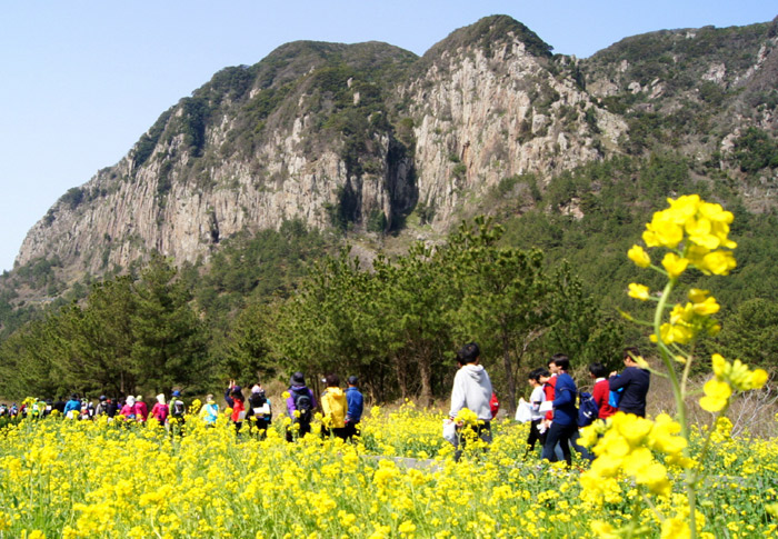 People enjoy the scenery of Jeju Island while walking along the Seogwipo Rape Flower International Walking Festival (photo courtesy of Seogwipo City)
