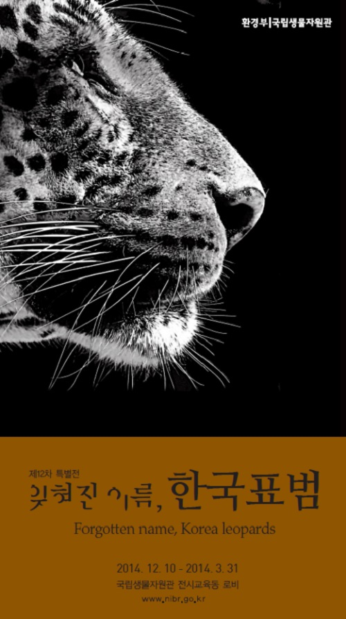 """The official poster for the """"Forgotten Name, Korean Leopards"""" exhibition."""