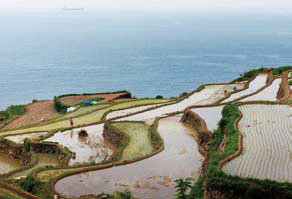 The name of the village is Gacheon Daraengi Maeul. Daraengi means terraced rice paddies on mountain slopes.