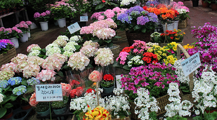 All kinds of colorful flowers wait to be purchased at the Yangjae Flower Market, giving the feeling of an early spring. (photo: Limb Jae-un)
