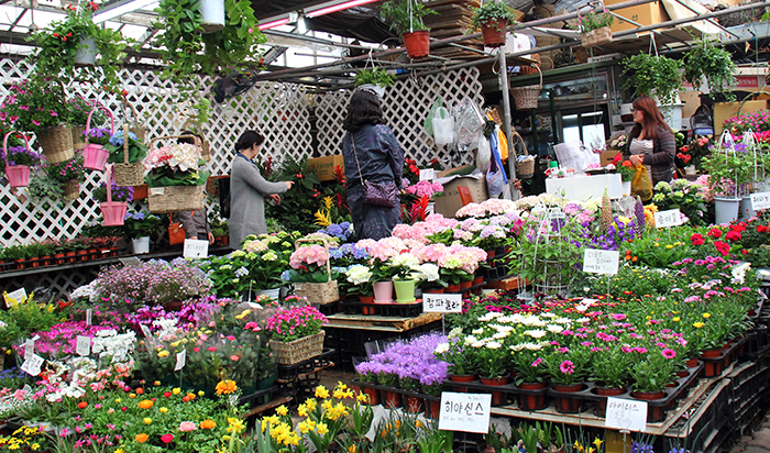 Customers shop for flowers to lighten up their homes in preparation for spring. (photo: Limb Jae-un)