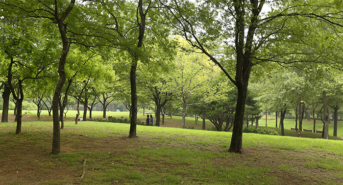 Yeouido Park is an oasis for Seoul citizens, as the trees and shrubs provide shade and a refuge from the busy pulse of city life. (photo: Jeon Han)