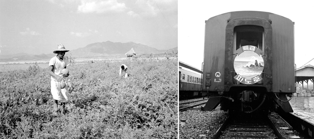 Left: A photo shows farmers working in a watermelon field in Chungju, Chungcheongbuk-do in 1959. Right: A train with a logo image of the ocean takes summer travelers to their vacation destinations in 1968 (photos courtesy of the National Archive of Korea).