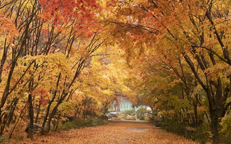 Fall Foliage Comes 1 4 Days Later This Year Korea Net The Official Website Of The Republic Of Korea