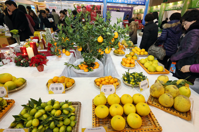 The Korea Seed and Variety Service developed a technology to identify tangerine breeds through DNA analysis of a small amount leaf. (photo: Yonhap News)