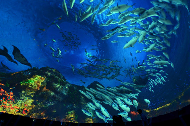 As a beam of light shoots through the pitch blackness on a large dome screen inside the Korea Pavilion, visitors are submerged deep under the sea (photo: Yonhap News).