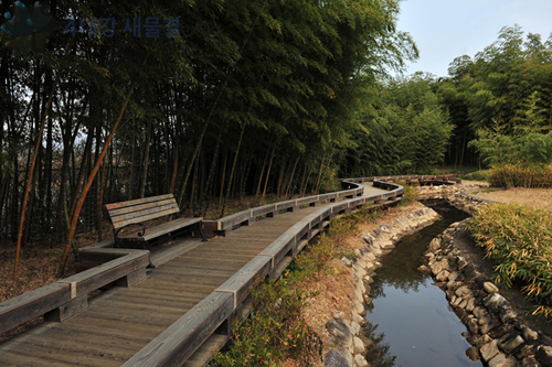 The Yeongsan River flows through a bamboo grove in Damyang County, Jeollanam-do (photo courtesy of Office of National River Restoration).
