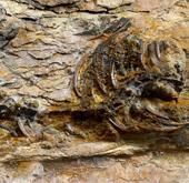 Complete carnivorous dinosaur found for first time in Korea