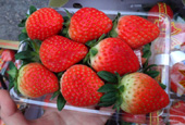 Korean_Strawberry_Export_th_02.jpg