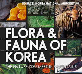 Flora & Fauna of Korea